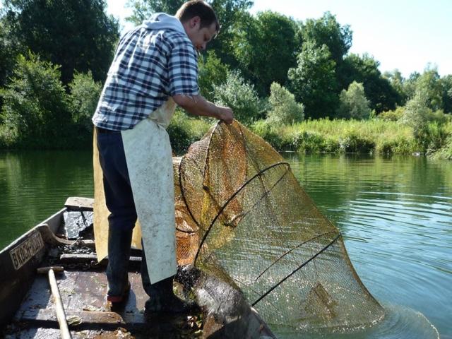 Fischfang im Taubergiessen mit Netz