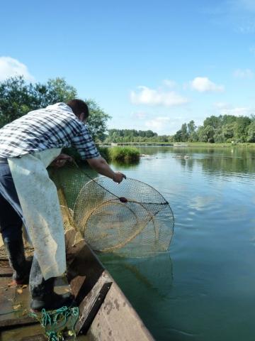 Auswurf des Fischnetzes im Taubergiessen
