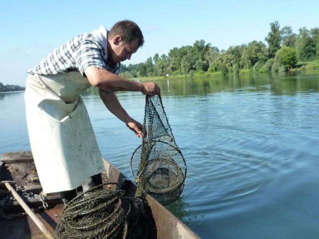 Fischnetz einholen im Taubergiessen